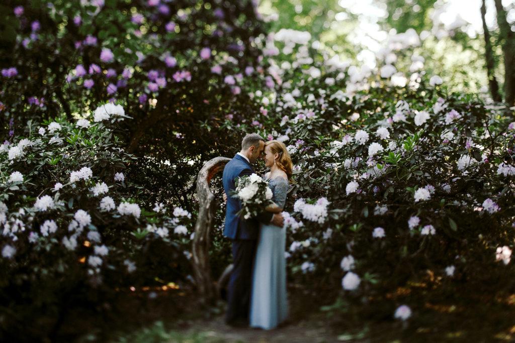 rododendrony w mosznej