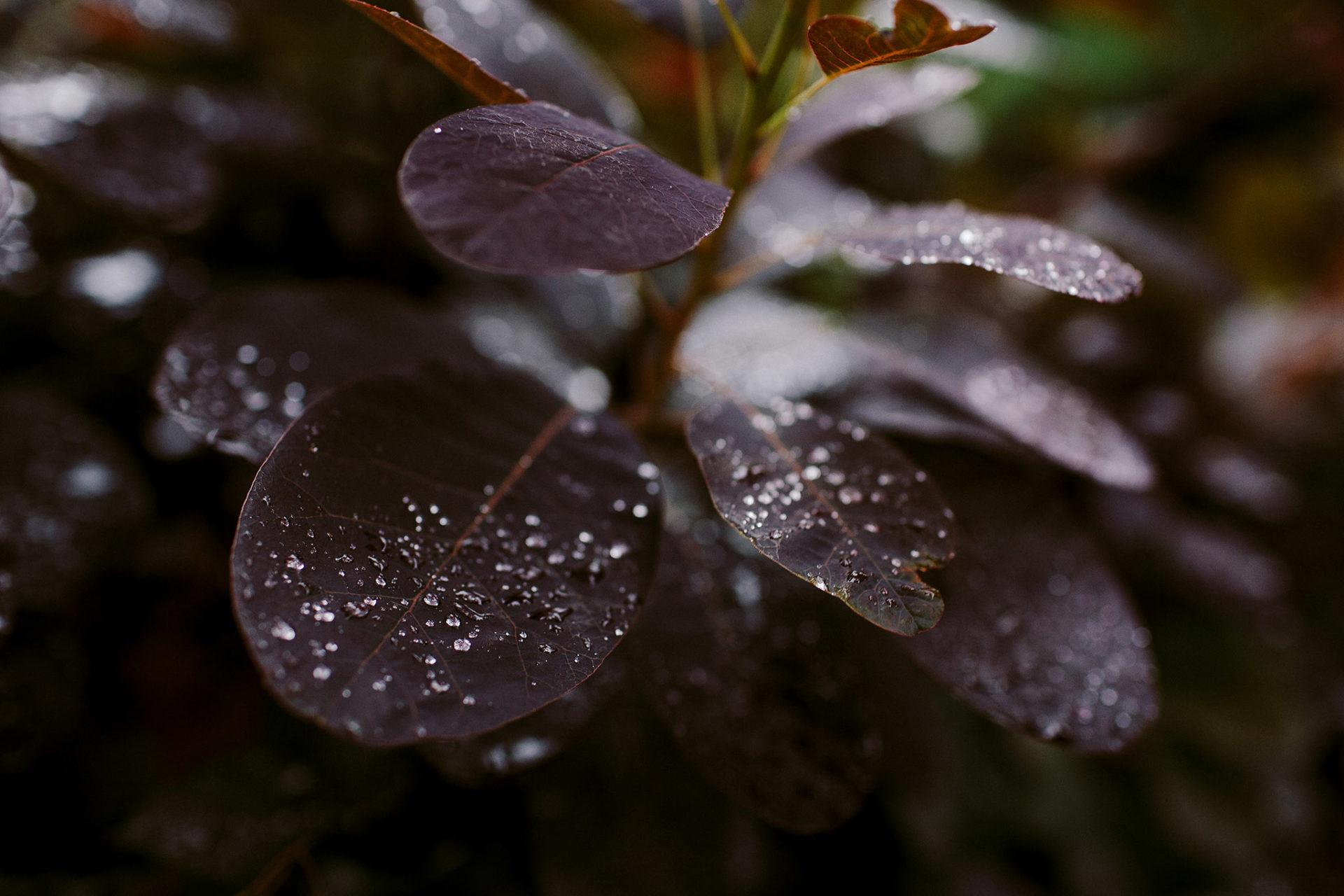 deszcz lipcowy